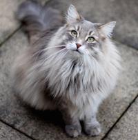 Поведение кошки