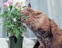 Кошка и растения