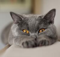 Гельминтозы кошек