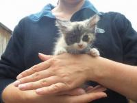 Обыкновенное чудо, произошло для маленького котенка!