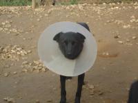 Стерилизация – Цыганка, бездомная собака.