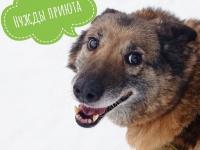 Физ-ра с собаками