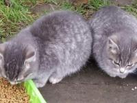 4 малыша-котенка