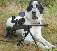 С собакой на службу