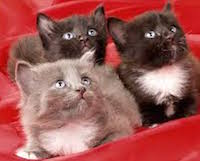 Стерилизация кошки