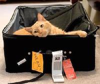 Путешествие с кошкой